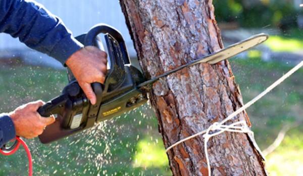 The What And Why Of Tree Removal