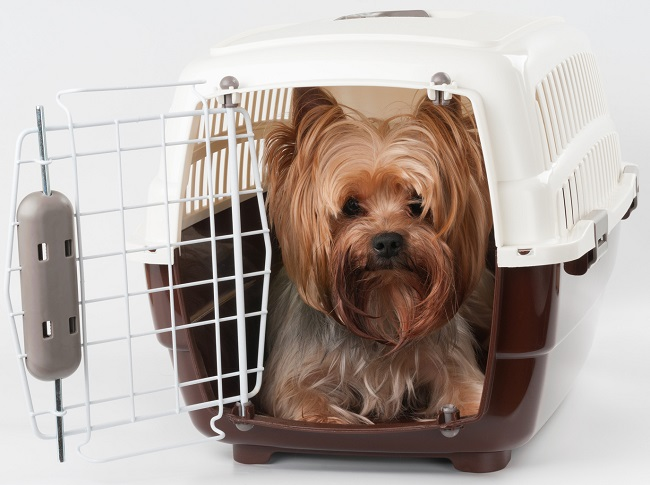How To Choose A Trustworthy Pet Travel Service?