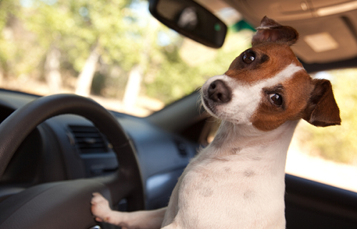 Car Journeys With Your Dog