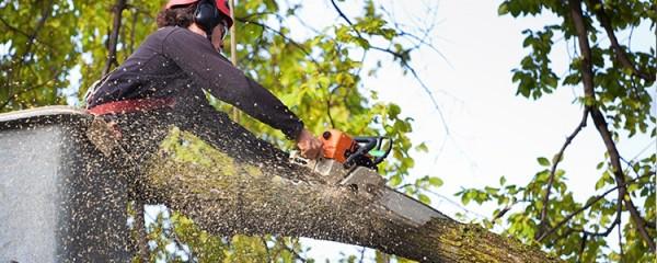 Teufelberger fimblSAVER Tree Surgeon Friction Cambium Saver 1.25m