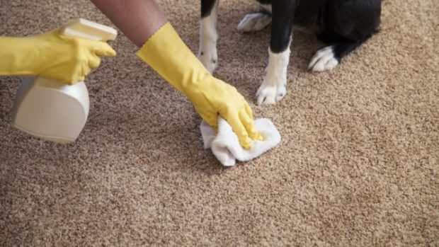 4 Homemade Products To Clean Carpets
