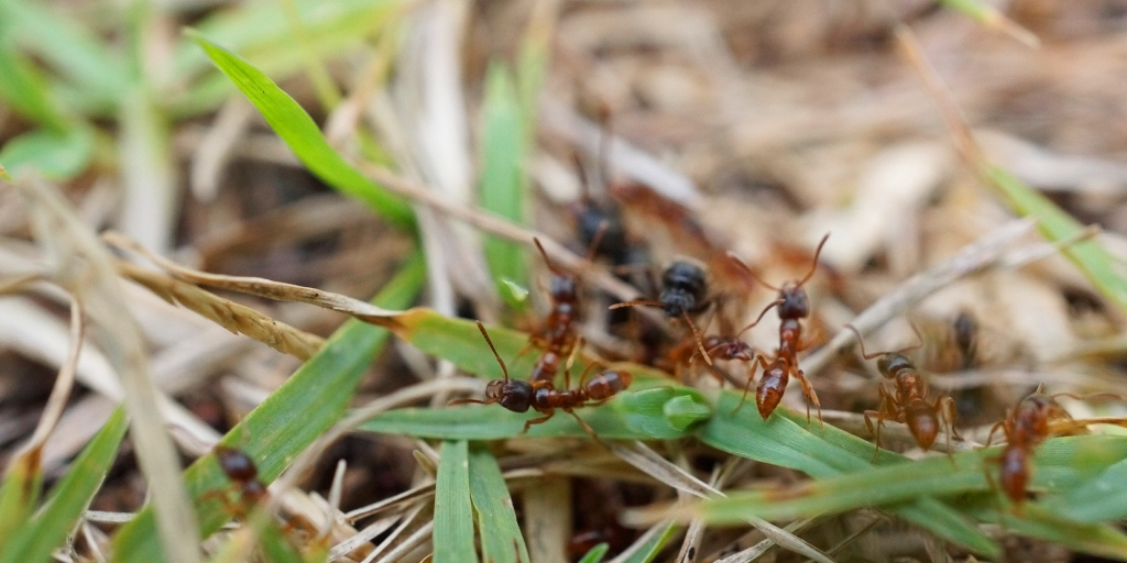 Tips On How To Choose A Pest Control Company