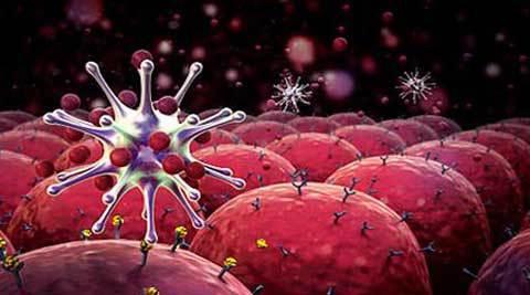 Gene In Brain Linked To Kidney Cancer