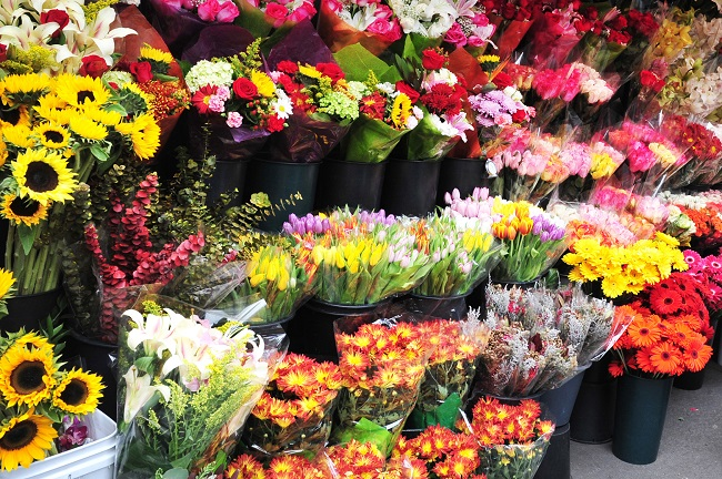 Roses Wholesale