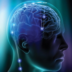 Cook The Foods Of Brain With Fresh Materials And Keep The Body Energetic
