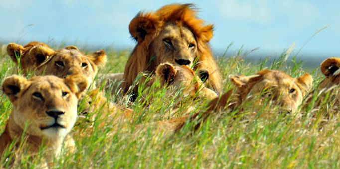 The Reasons Why You Should Consider Going On An Overland Tanzania Vacation