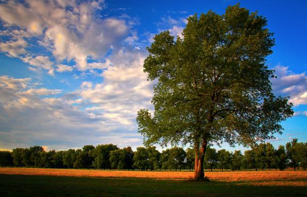 Texas Tree Planting