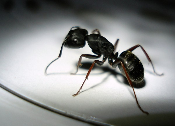 4 Ways To Protect Your Home Against Ants