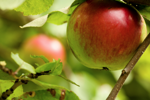 Taking Care Of Your Fruit Tree