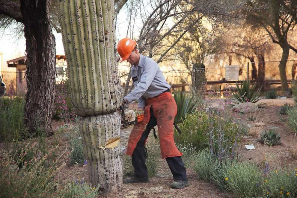 Professional Cactus Removal