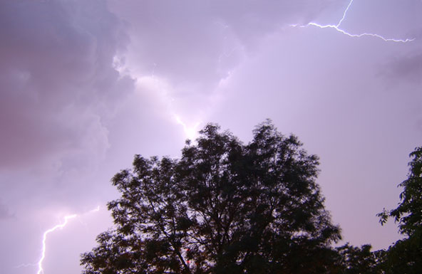 How To Spot And Protect Trees From Lightning