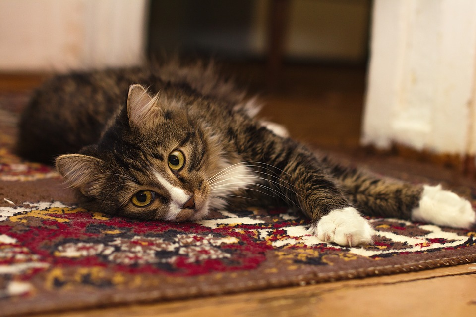 What's That Smell? Leading Causes of Carpet Odor