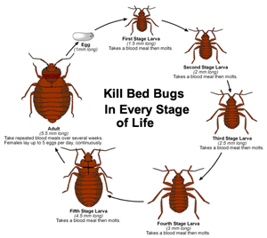 Pests Live In Montgomery New Jersey