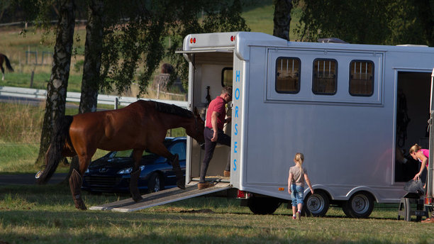 Reasons To Invest In Horse Trailer Insurance