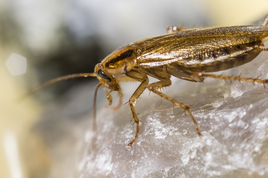 Common Pests During Winter